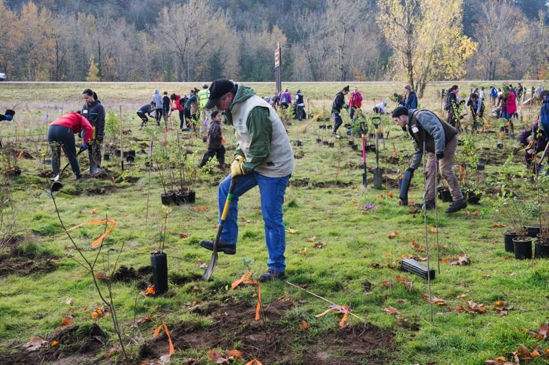 CONTRIBUTED PHOTO: PORT OF PORTLAND  - The new oak woodland habitat will provide a buffer between the main parking lot and Interstate 84.