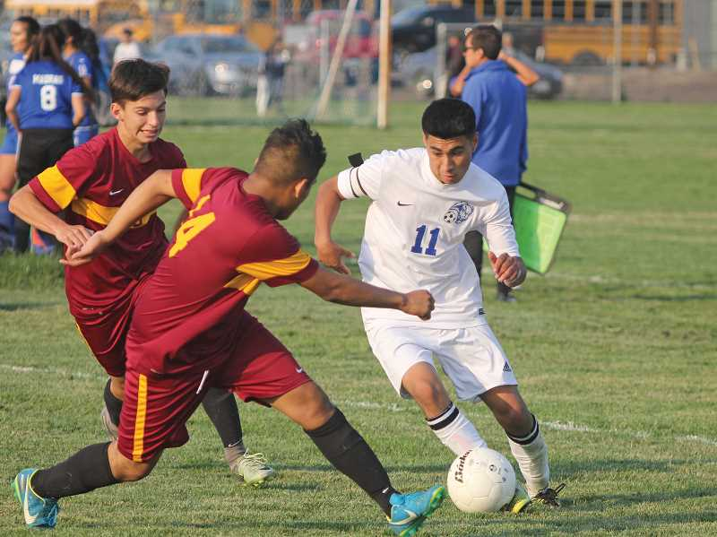 WILL DENNER/MADRAS PIONEER - Madras senior Jonathan Reynoso (11) was named Tri-Valley Conference Player of the Year for the second consecutive season, after he finished with 20 goals and 12 assists for the season — both team highs — and helped lead the White Buffalos to an undefeated (11-0-2) regular season and 8-0-2 league mark.