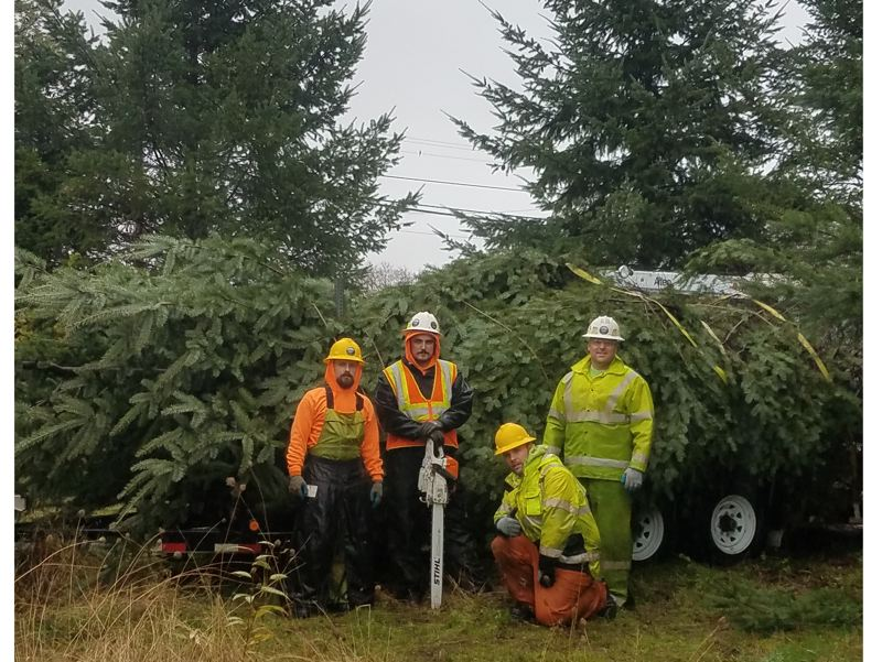CONTRIBUTED PHOTO - City staff harvested and placed the town Christmas tree for the 2017 festivities on Nov. 15.