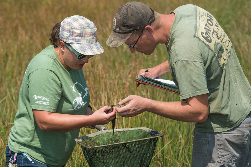 PAMPLIN MEDIA GROUP: CHRISTOPHER OERTELL  - Laura Trunk, a restoration biologist, and Chris Rombough, an independent biologist, look through a net to screen for insects and aquatic life that live in Kingfisher Marsh at the Jackson Bottom Wetlands Preserve in Hillsboro.