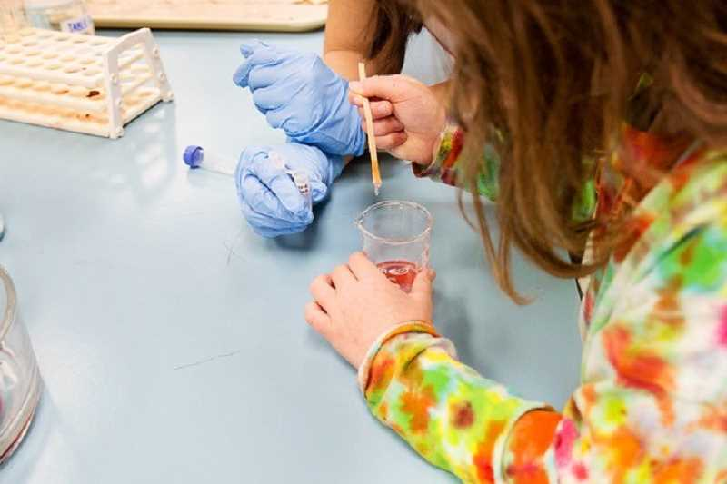 COURTESY PHOTO: PACIFIC UNIVERSITY - Children will have the chance to extract strawberry DNA at Biotopia.