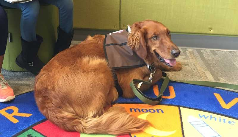Read to the Dog, in this case Digby, will be held every Friday from 3:30 to 4:30 p.m. at the Canby Public Library.