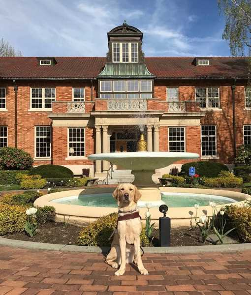 SUBMITTED PHOTO: YANA RAMOS - Greta poses proudly outside of Marylhurst University, where her owner, Yana Ramos,is studying Music Therapy.