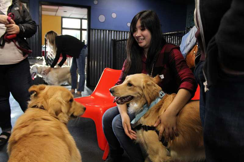 REVIEW PHOTO: SAM STITES - Tiana Lee of Olympia, Wash., and her golden retriever Ellie attended the PDX Goldens meet-up on Sunday at LexiDog in Lake Oswego. Lee and Ellie drove down to meet the PDX Goldens group for the first time. The pair usually go to Seattle but connected with Melissa Heinonen on Instagram and decided to come check out the group.