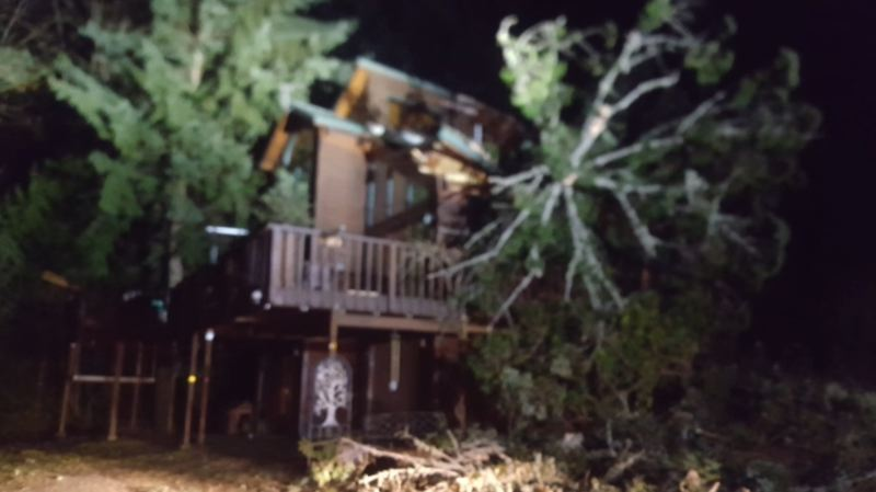 KOIN 6 NEWS PHOTO - A tree fell onto a house in Corbett, December 10 2017.