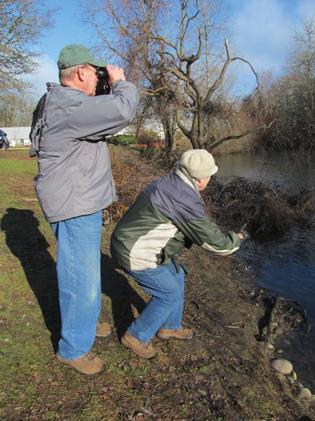 PHOTO BY ELLEN SPITALERI - During the 2014 Christmas Bird Count, Sally Shook points out a nearby bufflehead duck, while her husband Dick Shook checks out the other waterbirds at a pond not far from North Clackamas Park in Milwaukie.