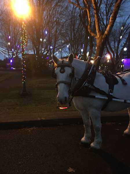 SUBMITTED PHOTO: TERESA RITCHEY - Teresa Ritchey, owner of Special T Carriage in Mulino, has been bringing her horse-drawn carriage to Canby for holiday rides.