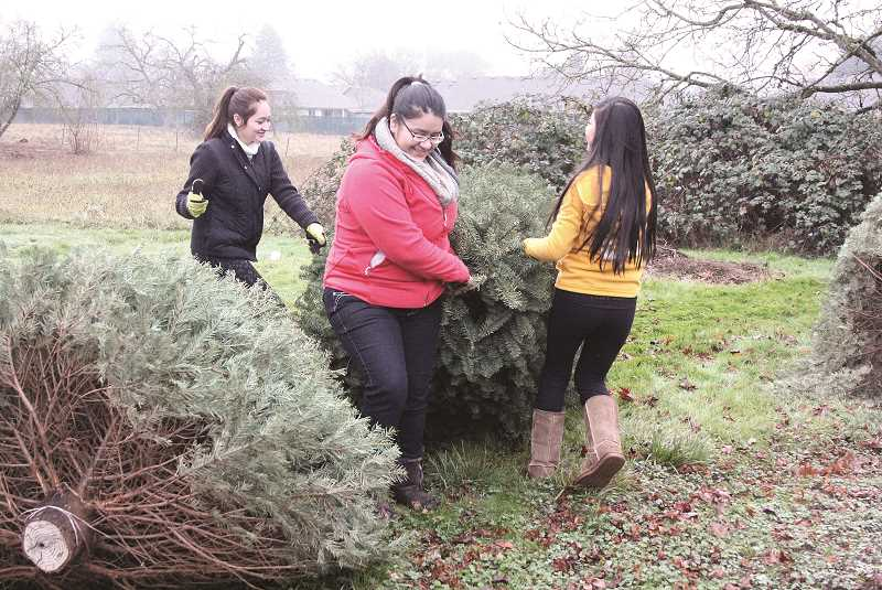 INDEPENDENT FILE PHOTO - Youth group volunteers will pick up your tree and dispose of it for a donation.