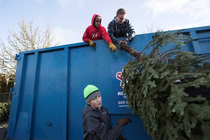 SPOKESMAN PHOTO: JAIME VALDEZ - Boy Scouts George Krecklow (left) Cade Buterworth, and Will Katz, below, with Wilsonville Scouting Troop 194, place Christmas trees in a container at Wood Middle School parking lot during a recycling event Jan. 6.