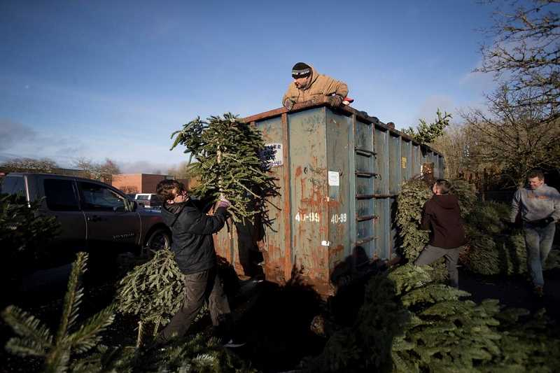SPOKESMAN PHOTO: JAIME VALDEZ - Members of Troop 194 and parent volunteers recycle Christmas trees Jan. 6 in Wilsonville.
