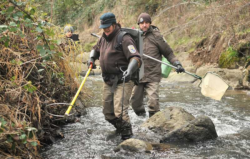 REVIEW PHOTO: VERN UYETAKE - Brook Silver moves upstream with her electrofishing equipment while Brian Davis follows behind. The U.S. Fish and Wildlife Service biologists were searching for coastal cutthroat trout in Tryon Creek in advance of a project to replace the concrete culvert under Highway 43.