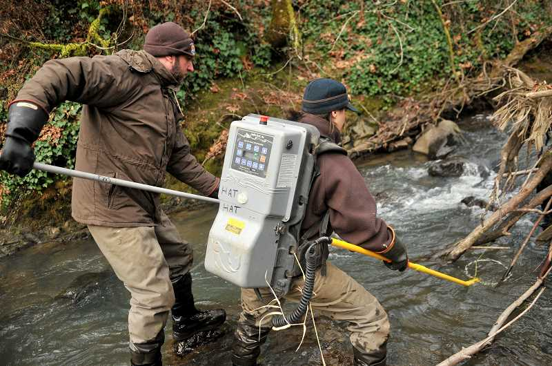 REVIEW PHOTO: VERN UYETAKE - The backpack used for electrofishing is an efficient way to safely capture fish without harming them. Navigating the slippery creek bed while wearing it is a different story.
