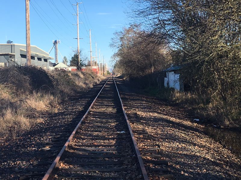 COURTESY OF THE WASHINGTON COUNTY SHERIFF'S OFFICE - A pit bull was fatally stabbed after it reportedly attacked a resident's dog near the railroad tracks at North 10th Avenue in Cornelius.