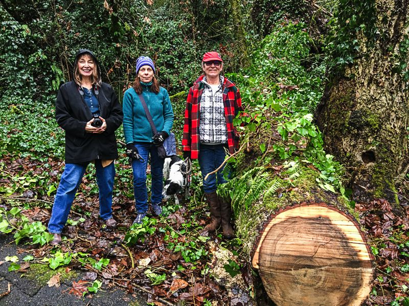PHOTO COURTESY: ROGER FOWLER-THIAS - OCPF members (from left) Christina Fowler-Thias, Lisa Novak and Didi Dahlsrud walk Lucy the dog next to a recently fallen ivy-covered tree in Waterboard Park.