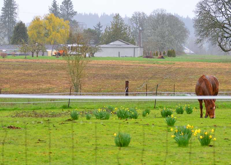 SPOKESMAN FILE PHOTO - Wilsonville hopes a UGB expansion in the Frog Pond South area could open up room for two new neighborhoods and as many as 1,322 new homes.