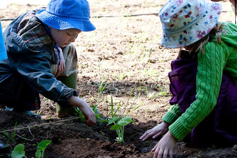COURTESY PHOTO - Swallowtail students have the opportunity to work on the school's farm campus in Hillsboro, where they learn about gardening, life cycles, animals and caring for the Earth.