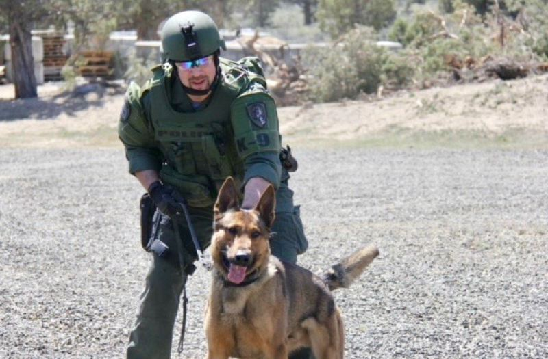 CONTRIBUTED PHOTO: GRESHAM POLICE DEPARTMENT K9 UNIT - Greshams Shawn Debler handles the training duties for the K9 Unit. Here he works with his own dog, Basco.