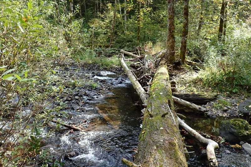 CONTRIBUTED PHOTO: CLACKAMAS RIVER BASIN COUNCIL - Native plants will soon be planted in this area.