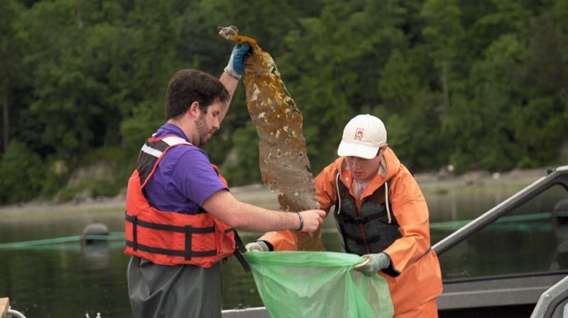 GREG DAVIS, COURTESY OF EARTHFIX - Stephen Schreck (left) and Ryan Cox of Puget Sound Restoration Fund collect kelp samples.