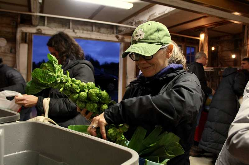 REVIEW PHOTO: SAM STITES - Shelly Stout of Lake Oswego picks out some Brussels sprouts at the winter Community Supported Agriculture pick-up at Luscher Farm.