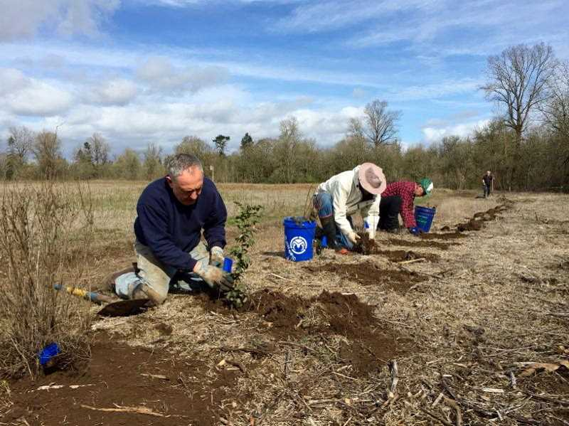 COURTESY PHOTO: WILLAMETTE RIVERKEEPER - Willamette Riverkeeper, in conjunction with Oregon's parks and recreation department, is looking for volunteers to help with a tree planting at Willamette Mission Park on Saturday.