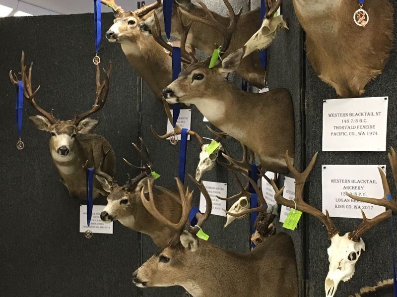 COURTESY: PACIFIC NORTHWEST SPORTSMEN'S SHOW - The Head & Horns Competition measures the top mounted trophies at the Pacific Northwest Sportsmen's Show.