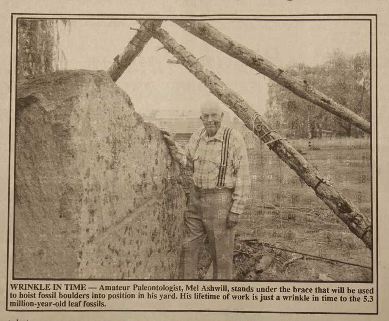 PIONEER FILE PHOTO - A photo of Mel Ashwell from the Nov. 14, 1991 edition on the Pioneer, after he helped preserve boulders containing rare leaf fossils during highway construction on the Warm Springs Grade.