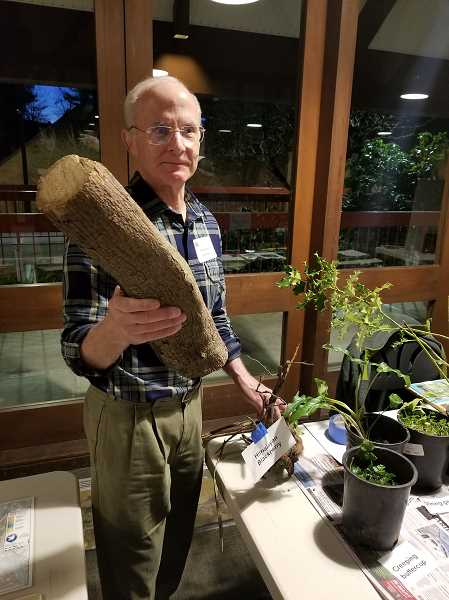 REVIEW PHOTO: ANTHONY MACUK - Watershed Council member Mike Buck displays a section of English ivy removed from Springbrook Park, illustrating just how large the vines can become.