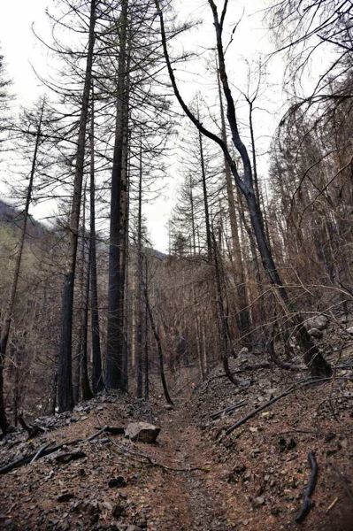 CONTRIBUTED PHOTO: OREGON STATE PARKS - The trail section just before Upper McCord Falls, taken on Feb. 2 by crews doing assessments in the wake of the Eagle Creek Fire.