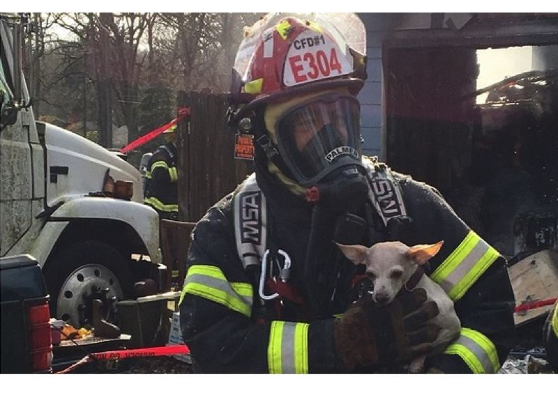 PHOTO COURTESY: CLACKAMAS FIRE - Lt. David Palmer rescues a pet from a garage fire in Oak Grove on Feb. 10.