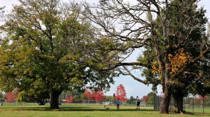 COURTESY CITY OF GRESHAM - The Arboretum is a special place to enjoy the wide range of trees that thrive in the city. Visit the Arboretum at 2303 SE Palmquist Road at Gradin Community Sports Park.