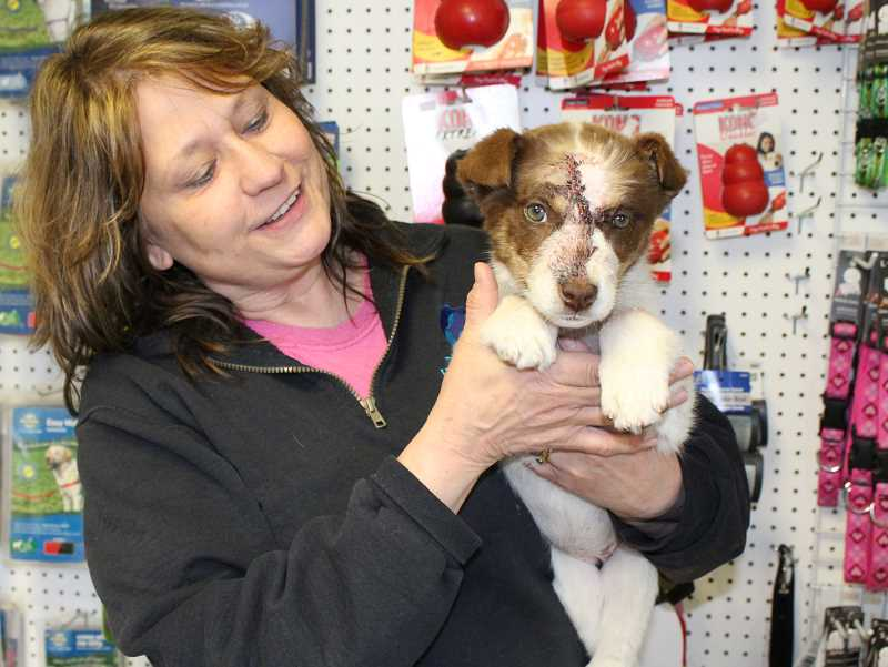 HOLLY M. GILL - Jerilee Drynan, operations manager at Three Rivers Humane Society, holds 'Sage,' who is recovering from being struck by a car, which fractured her skull.