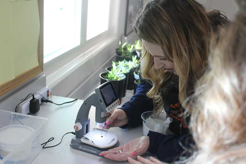 Crystal Sullenger looks at one of the Taylor's checkerspot butterfly eggs through a digital microscope.
