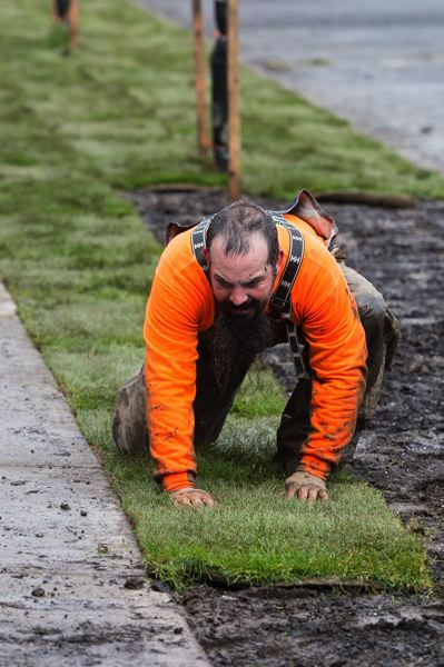 STAFF PHOTO: CHRISTOPHER OERTELL - Matt Capron from D&D Landscape Services places sod at the Cedar Manor Apartments in Forest Grove.