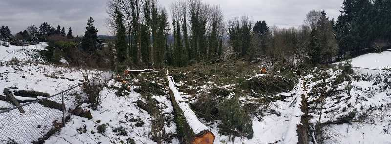 REVIEW PHOTO: ANTHONY MACUK - Luis Pacheco's family owns a 17-acre property in the Skylands neighborhood of Lake Oswego that has been left largely undeveloped. Two weeks ago, he visited the site and discovered that dozens of trees had been cut down.  (This panoramic image skews the edges of the property; the two fences are actually positioned at 90-degree angles to one another.)