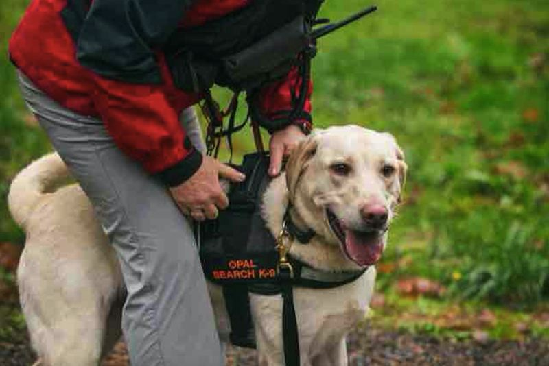 CONTRIBUTED PHOTO: MOUNTAIN WAVE SEARCH AND RESCUE - Opal has volunteered with Mountain Wave Search and Rescue for four years, since she was a puppy.