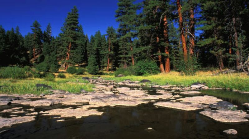 COURTESY FOREST SERVICE - The headwaters of the Crooked River gather atop the Ochoco mountains.