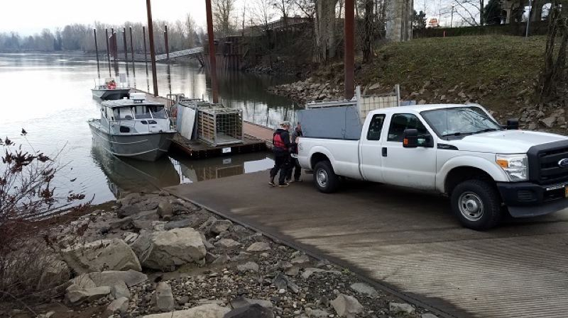 PHOTO COURTESY: ODFW - The Oregon Department of Fish and Wildlife has been trapping sea lions from the Willamette Falls and transporting them to the Oregon Coast in order to help boost the steelhead run.