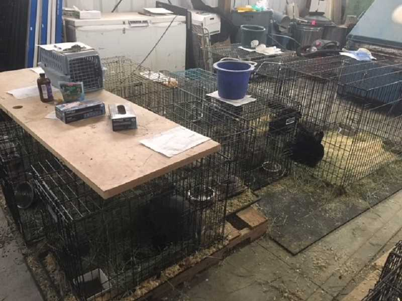 PHOTO COURTESY OF PRINEVILLE POLICE DEPARTMENT - Eighteen rabbits were rescued following an animal abuse case in Prineville.