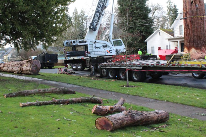 STAFF PHOTO: MARK MILLER - Pieces of a sequoia tree being removed in the 2400 block of 18th Avenue lie on the grass at Rogers Park.