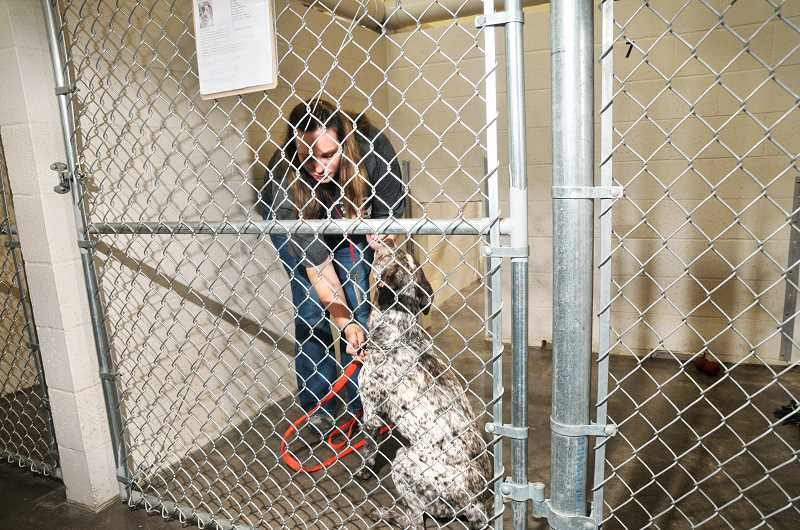 GRAPHIC FILE PHOTO - The Newberg Animal Shelter was constructed with funds gathered from a nonprofit group as well as the city.