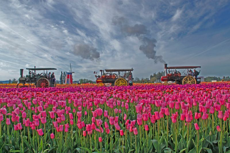 COURTESY PHOTO - Organizers of the Wooden Shoe Tulip Festival are encouraging visitors to practice their photography skills and share sights and sounds on social media. Tulips and daffodils are ready for viewing, and the festival opens March 23.