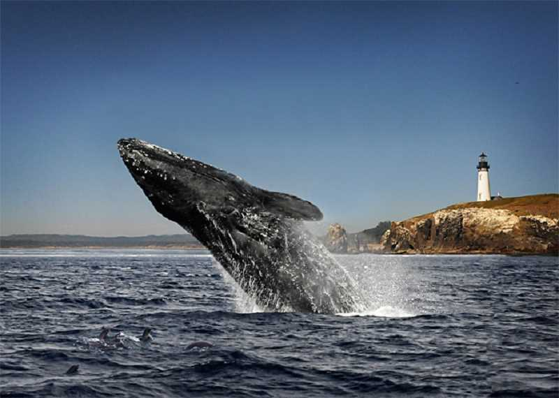 Special whale watching events set for the Oregon Coast March 24-31.