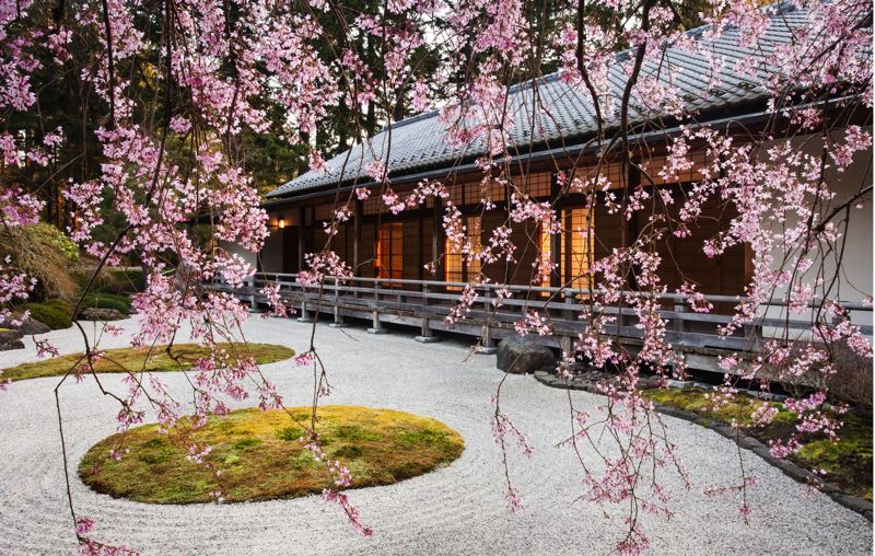 COURTESY: JONATHAN LEY - Spring brings out the cherry blossoms at Portland Japanese Garden, a destination for parents and children during spring break.