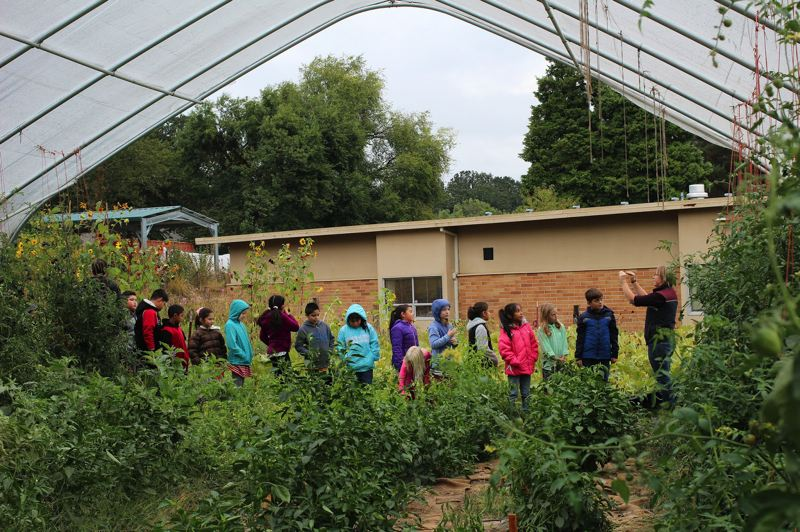 PHOTO COURTESY: MICHAEL CLARK - Schoolyard Farms grows fresh produce on unused school grounds in Jennings Lodge to teach kids about farming and gardening in the Oregon City School District.