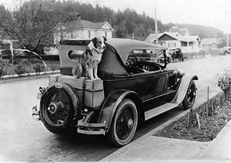 CONTRIBUTED PHOTO - Bobbie of Silverton on the Overland Red Bird touring car that transported the Brazier family from Oregon to Indiana. Sadly, the family had to return in this car without their beloved dog. Youll be amazed to learn how Bobbie defied the odds and got back home.