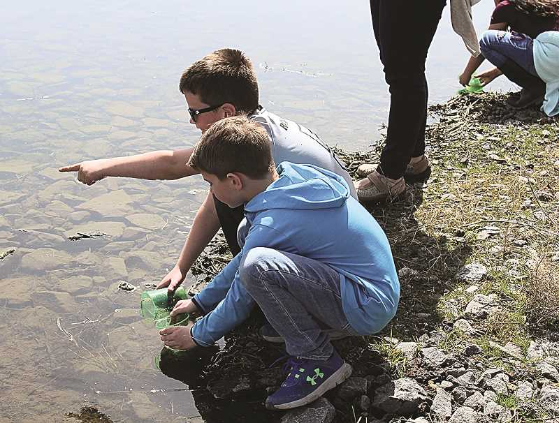 HOLLY SCHOLZ/ CENTRAL OREGONIAN  - Barnes Butte Elementary first-graders Brock King (in blue) and Emmett Klann release bluegill fish into pond 5 at the Crooked River Wetlands Complex Monday afternoon. The fish will help control the gnats and midges populations. The students are becoming stewards of the wetlands as part of their storyline.