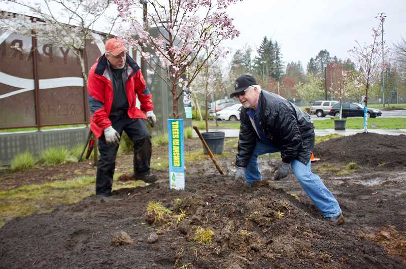 OUTLOOK PHOTO: CHRISTOPHER KEIZUR - Gresham Council President Kirk French, right, got in the mud Thursday morning, April 5, to help plant cherry blossom trees at Ebetsu Plaza in Main City Park.
