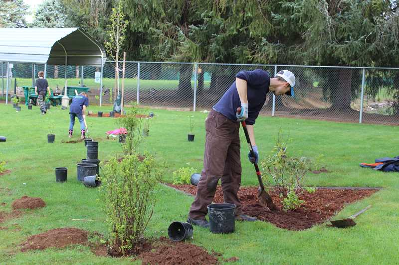 CONTRIBUTED PHOTO: CLACKAMAS RIVER BASIN COUNCIL - A participant of the Clackamas River Basin Councils 2017 Earth Day event in Estacada tends to a plant.