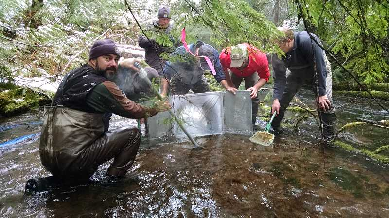 CONTRIBUTED PHOTO: STEVE STARCEVICH, OREGON DEPARTMENT OF FISH AND WILDLIFE - Leaders for a project to reintroduce bull trout to the Clackamas River document evidence of successful bull trout reproduction in the river.